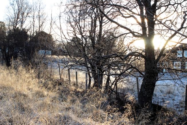 01.12.15 rimfrost